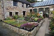 Burncoose nursery gardens, Caerhays estate, Gwennap, Redruth, Cornwall, England, UK