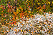 Snow in autumn in The Canadian Rocky Mountains. Icefields Parkway.<br />