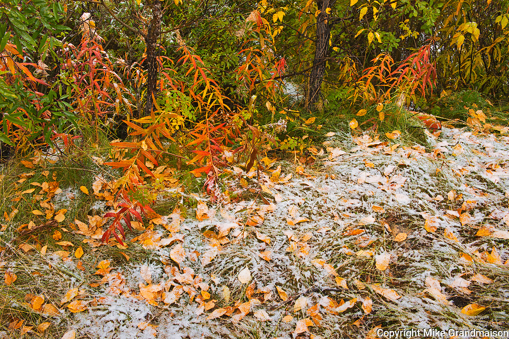 Snow in autumn in The Canadian Rocky Mountains. Icefields Parkway.<br />Jasper National Park<br />Alberta<br />Canada