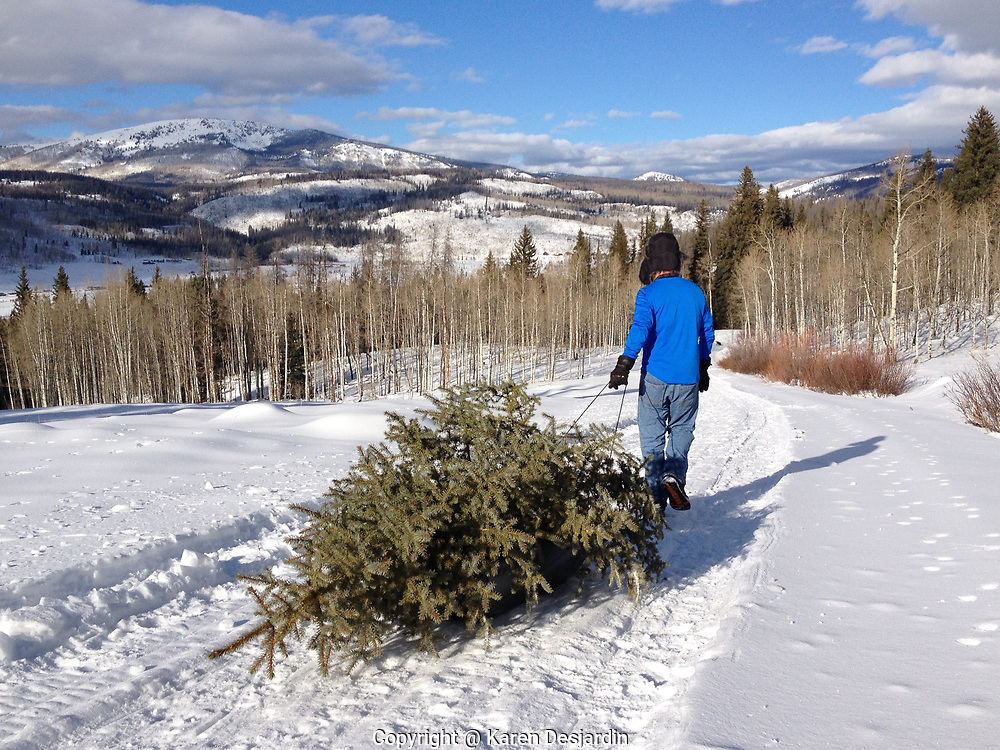 Larry Desjardin pulls a freshly cut Evergreen tree, soon to be decorated as a Christmas tree, on a sled back to his car.
