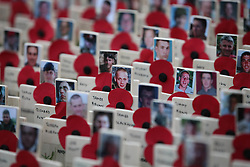 A sea of crosses dedicated to the casualties of Afghanistan at the Field of Remembrance which opened at Westminster Abbey in London ,Thursday, November 10th 2011.  Photo by: Stephen Lock / i-Images