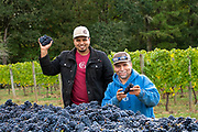 Patricia Green Cellars pinot noir harvest 2018