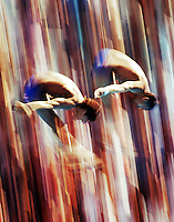 Synchronised divers perform together at near terminal velocity during their event at the 2005 World Swimming and Diving Championships in Montreal, Canada. (Copyright Michael Dodge/Herald Sun)