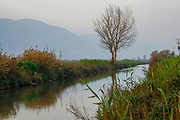 Israel, Hula Valley, Agmon lake winter January