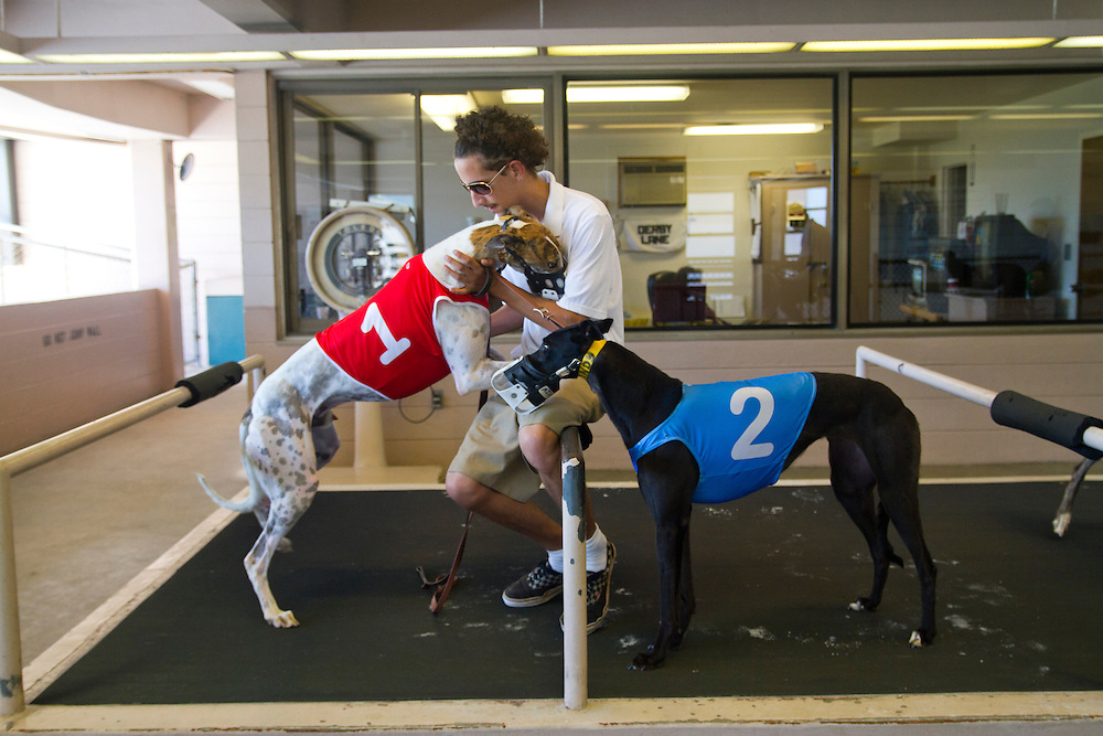Rey Rojas handles Hallo Savinio (#1) and RJ's Flying Katy (#2) before the fourth race of a Wednesday matinee. Derby Lane in St. Petersburg has Greyhound racing every evening Monday through Saturday and has matinee racing on Wednesdays and Saturdays..Photo by James Branaman