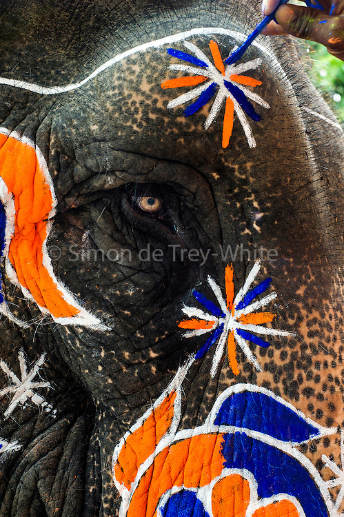 6th September 2014, New Delhi, India. Close-up of an elephant decorated for an Indian wedding at New Rajinder Nagar, New Delhi, India on the 6th September 2014<br />