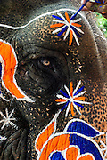 6th September 2014, New Delhi, India. Close-up of an elephant decorated for an Indian wedding at New Rajinder Nagar, New Delhi, India on the 6th September 2014<br /> <br /> <br /> Elephant handlers (Mahouts) eke out a living in makeshift camps on the banks of the Yamuna River in New Delhi. They survive on a small retainer paid by the elephant owners and by giving rides to passers by. The owners keep all the money from hiring the animals out for religious festivals, events and weddings, they also are involved in the illegal trade of captive elephants. The living conditions and treatment of elephants kept in cities in North India is extremely harsh, the handlers use the banned 'ankush' or bullhook to control the animals through daily beatings, the animals have no proper shelters are forced to walk on burning hot tarmac and stand for hours with their feet chained together. <br /> <br /> PHOTOGRAPH BY AND COPYRIGHT OF SIMON DE TREY-WHITE<br /> + 91 98103 99809<br /> email: simon@simondetreywhite.com photographer in delhi