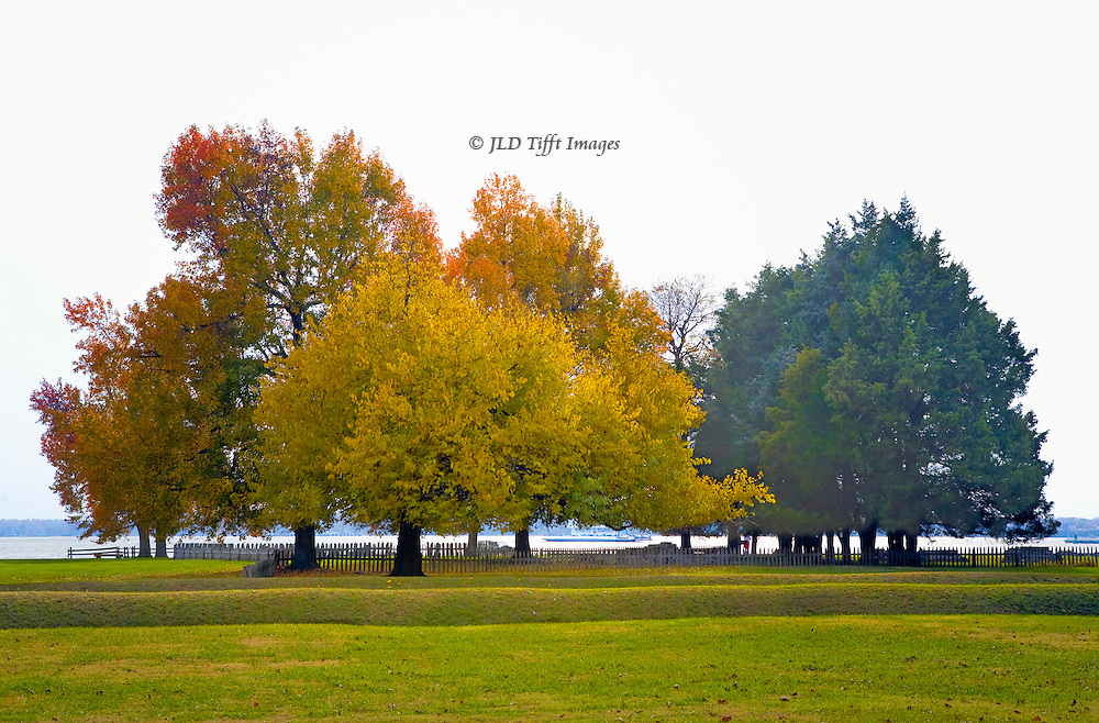 Small grove of autumn trees along the James River, on the original Jamestown island.