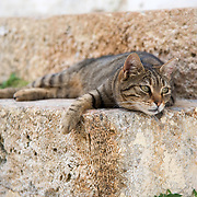 Cat relaxing on a doorstep in the Plaka neighborhood of Athens, Greece
