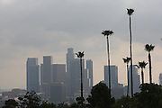 LOS ANGELES, CA - MARCH 21: General view of palm trees and the Los Angeles skyline from the top of the park as Korea competes against Venezuela during game one of the semifinal round of the 2009 World Baseball Classic at Dodger Stadium in Los Angeles, California on Saturday March 21, 2009. Korea defeated Venezuela 10-2. (Photo by Paul Spinelli/WBCI/MLB Photos)