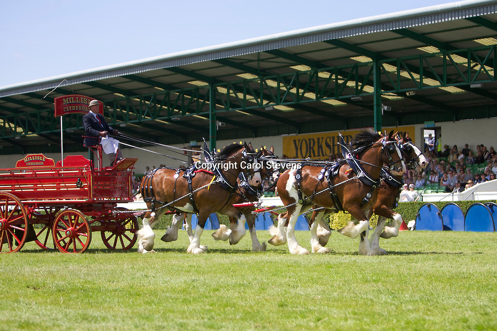 Mr Hugh Ramsay's Millisle Clydesdales Team of Flash, Glen, Ivy &amp; Ricky<br />