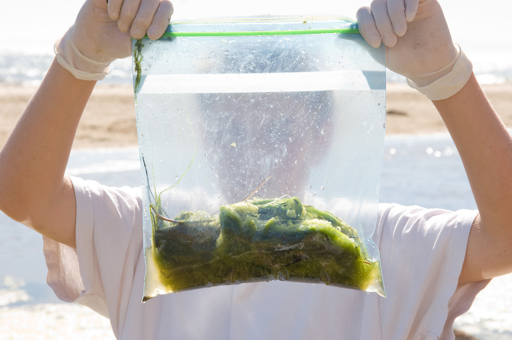 Boy holds up bag of algae for science project.