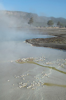 Thermophilic Bacteria in Biscuit Basin, Yellowstone National Park