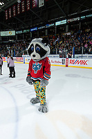 KELOWNA, CANADA - MARCH 18: Rocky Racoon, the mascot of the Kelowna Rockets stands on the ice during intermission on March 18, 2015 at Prospera Place in Kelowna, British Columbia, Canada.  (Photo by Marissa Baecker/Shoot the Breeze)  *** Local Caption *** Rocky Racoon;