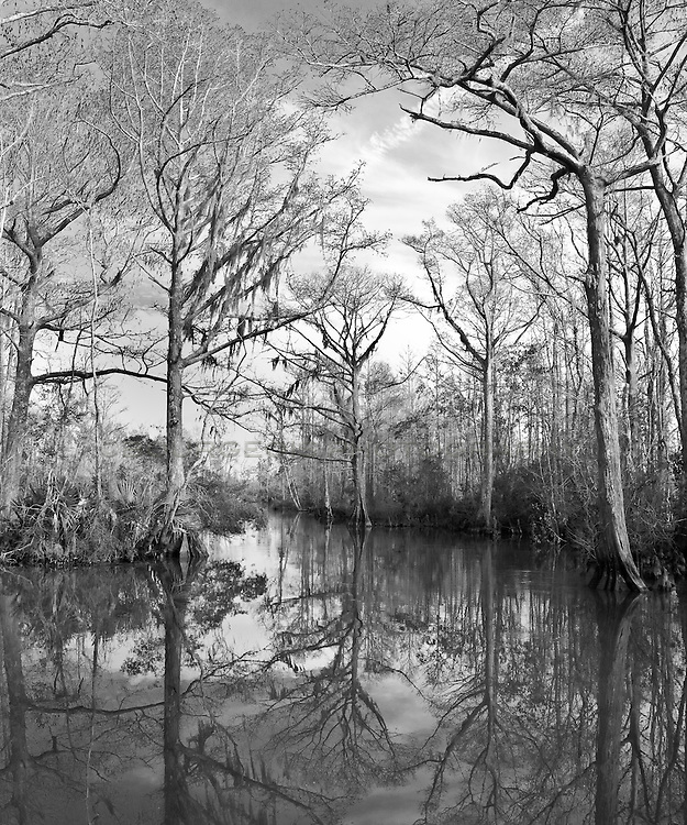 The backwoods bayou of Mississippi. Shot while floating down the Pascagoula River in the cypress swamps.