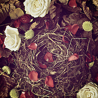 small bird nest made from grass and twigs with petals and white roses