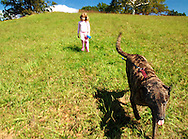 Girl And Big Dog On Leash On A Grass Hill In A Park