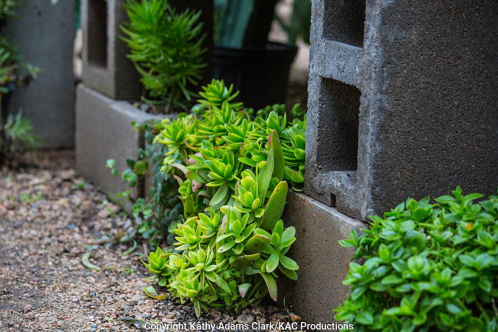 Garden, cinder block planter, succulent, Houston, late summer, Texas.