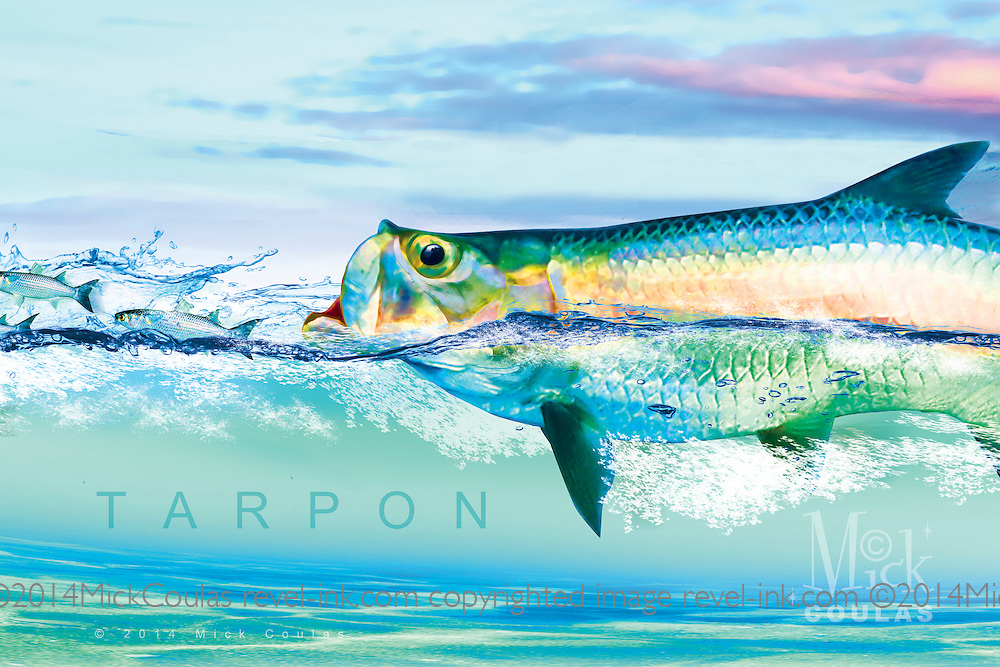 The Pursuit Series™ by Mick Coulas captures several species of game fish pursuing bait, available for license to be reproduced on clothing, prints and gifts that every fisherman will enjoy. This design features Tarpon pursuing Mullet. © Registered Call for Information.