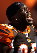 Chad Johnson of Cincinnati taunts Cleveland Browns fans after a Bengals' win in Cleveland.