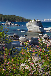"""Wildflowers at Bonsai Rock 2"" - These wildflowers were photographed along the East shore of Lake Tahoe at Bonsai Rock."