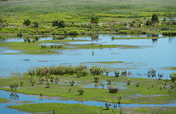 Overlooking green flora and pale blue waters in the wetlands
