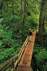 North America, Canada, Vancouver Island, Pacific Rim National Park Reserve, man on boardwalk in rainforest  MR
