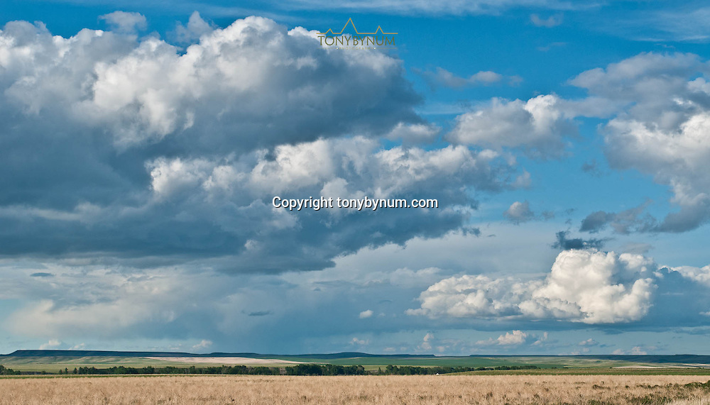 clouds building over prairie farm land in montana