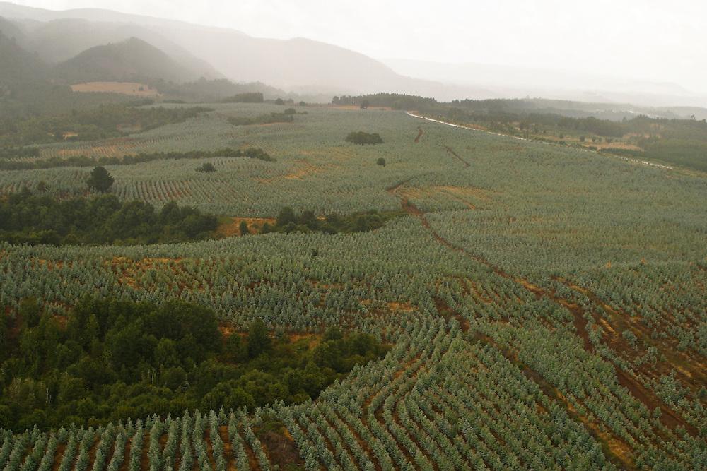 Aerial view of logging, tree plantations, sawmill in the sector of Cordillera Costa-Lebu, Chile, Feb. 16, 2004. Daniel Beltra/Greenpeace.