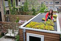 De aanleg van een groendak (met sedumcassettes) op een tuinhuisje van Mobilane.  Foto: Phil Nijhuis