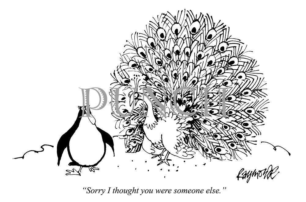 """Sorry, I thought you were someone else."" (a cartoon from Punch shows a Peacock mistaking a Penguin for a Peahen in its mating ritual)"