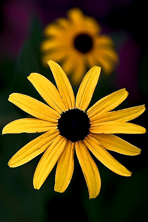 mayland flower 080724c 002 jpg reid mcnally photography