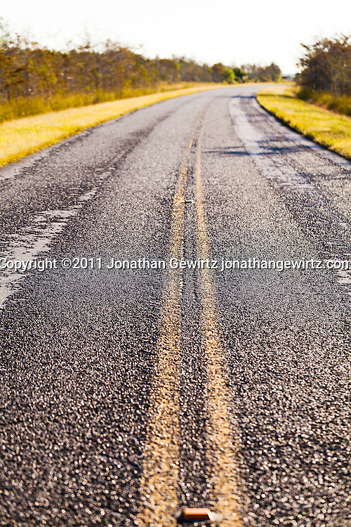 The main paved road in Everglades National Park, Florida. WATERMARKS WILL NOT APPEAR ON PRINTS OR LICENSED IMAGES.