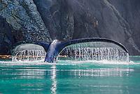 Humpback fluke backlight at the Inian Islands and Cross Sound in Southeast Alaska.