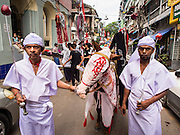 04 NOVEMBER 2014 - YANGON, MYANMAR: Burmese Shia Muslims in Yangon lead a procession for Ashura. Ashura, commemorates the death of Hussein ibn Ali, the grandson of the Prophet Muhammed, in the 7th century. The horse they led represents the horse Hussein rode into battle. Hussein ibn Ali is considered by Shia Muslims to be the third imam and the rightful successor of Muhammed. He was killed at the Battle of Karbala in 610 CE on the 10th day of Muharram, the first month of the Islamic calendar. According to Myanmar government statistics, only about 4% of the population is Muslim. Many Muslims have fled Myanmar in recent years because of violence directed against Burmese Muslims by Buddhist nationalists.     PHOTO BY JACK KURTZ