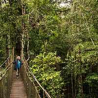 A Lindblad Expeditions guest walks along elevated bridges in the tropical rainforest canopy in Amazon Natural Park off of the Marañon River. Pacaya Samiria National Reserve, Upper Amazon, Peru.