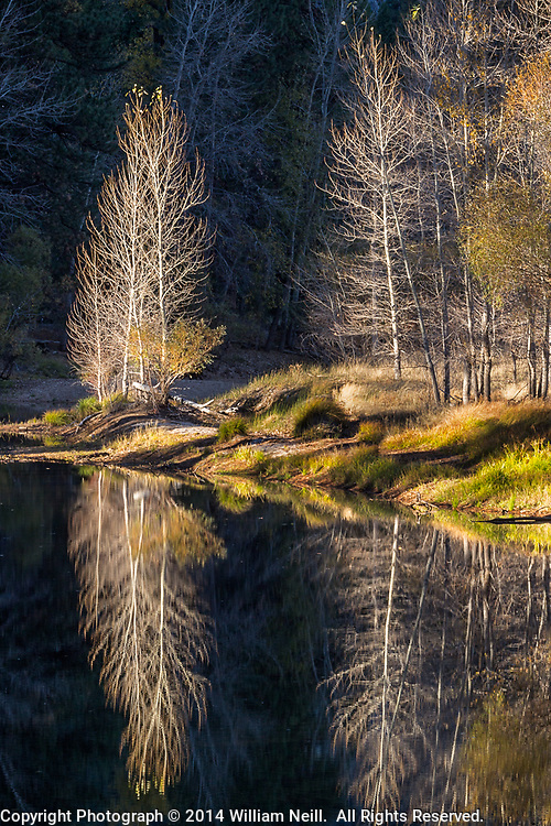 Cottonwoods reflected, Merced River, Yosemite National Park, California 2014