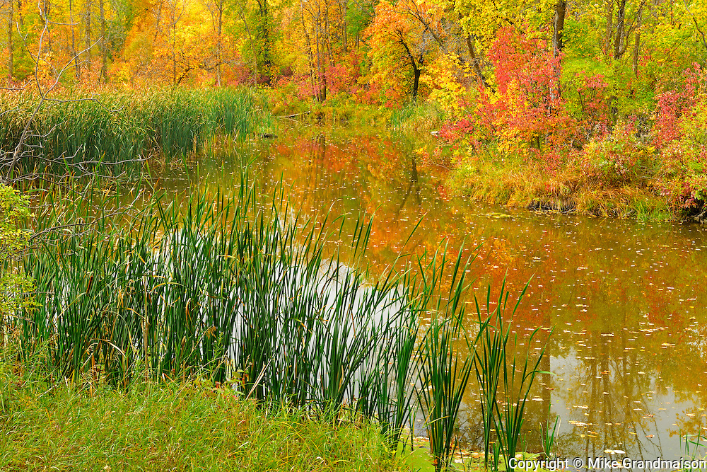Autumn colors in Seine River Forest.<br /> Winnipeg<br /> Manitoba<br /> Canada