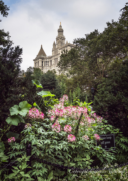 Flowers at City Hall Park with a view of the New York Municipal building.