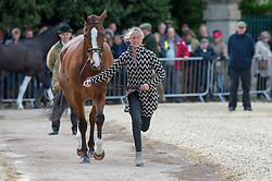 Wilson Nicola, (GBR), One Two Many<br /> First Horse Inspection - Mitsubishi Motors Badminton Horse Trials <br /> Badminton 2015