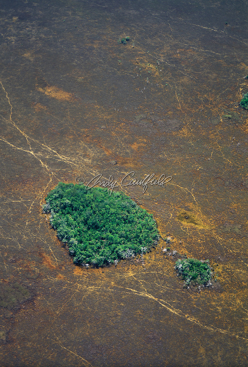 Aerial view of Hammock in Shark River Slough in dry season, Everglades NP, Florida USA