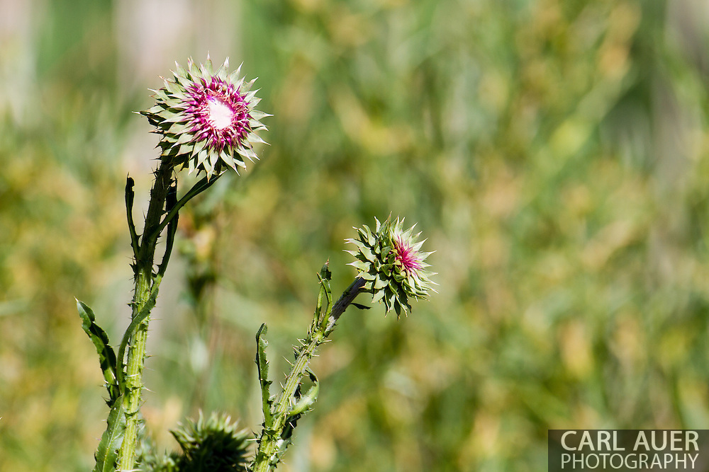 A very interesting flower blooming at the Majestic View Nature Center in Arvada