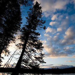 Spruce tree silhouette, East Inlet, Pittsburg, New Hampshire