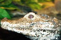 Baby Crocodile  New Jersey State Aquarium