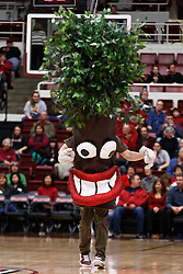 February 24, 2011; Stanford, CA, USA;  The Stanford Cardinal tree mascot performs during a timeout against the Oregon State Beavers during the first half at Maples Pavilion.  Stanford defeated Oregon State 73-37.