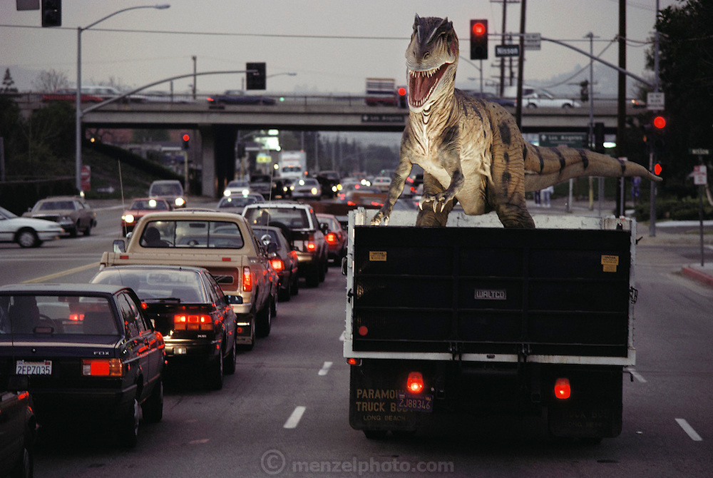 Snarling at the rush-hour traffic, this new animatronic; that is, lifelike and electronic replica of an Allosaurus is returning from the paint shop to the Dinamation factory in Orange County, California. Dinamation International, a California-based company, makes a collection of robotic dinosaurs. The dinosaurs are sent out in traveling displays to museums around the world. The dinosaur's robotic metal skeleton is covered by rigid fiberglass plates, over which is laid a flexible skin of urethane foam. The creature's joints are operated by compressed air and the movements controlled by computer.