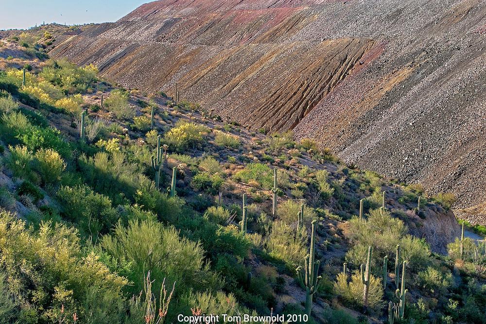 Copper Mine tailings and the Sorna desert vegitation