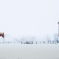 Belgian Horse heading back to the barn on a snowy winter's day.