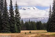 Muddy Meadows had taken on a golden brown cast and contrasted with the white summit of Mt Adams peaking through the sky.
