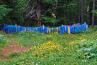 Mongolie, province de Ovorkhangai, drapeaux de prieres au monastère de Tovkhon fondé en 1648 par Zanabazar // Mongolia, Ovorkhangai, prayer flag at Tovkhon Monastery, founded in 1648 by Zanabazar